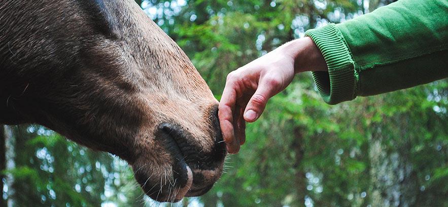3 ventajas de la alimentación animal KM 0