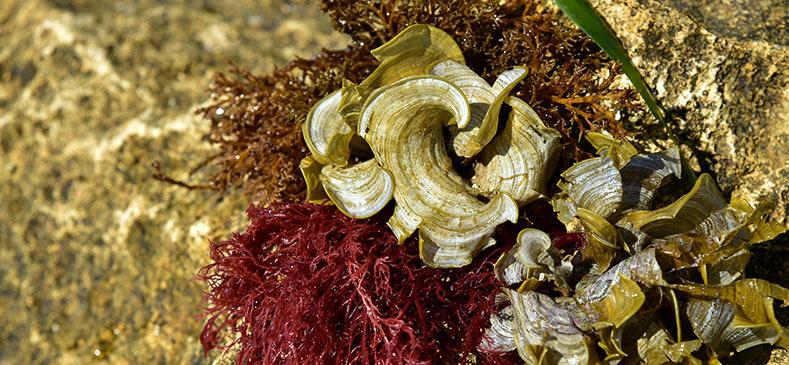 beneficios-del-uso-de-algas-como-ingrediente-en-piensos