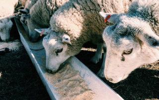por-que-hay-que-seguir-trabajando-el-desarrollo-de-piensos-de-calidad-para-animales